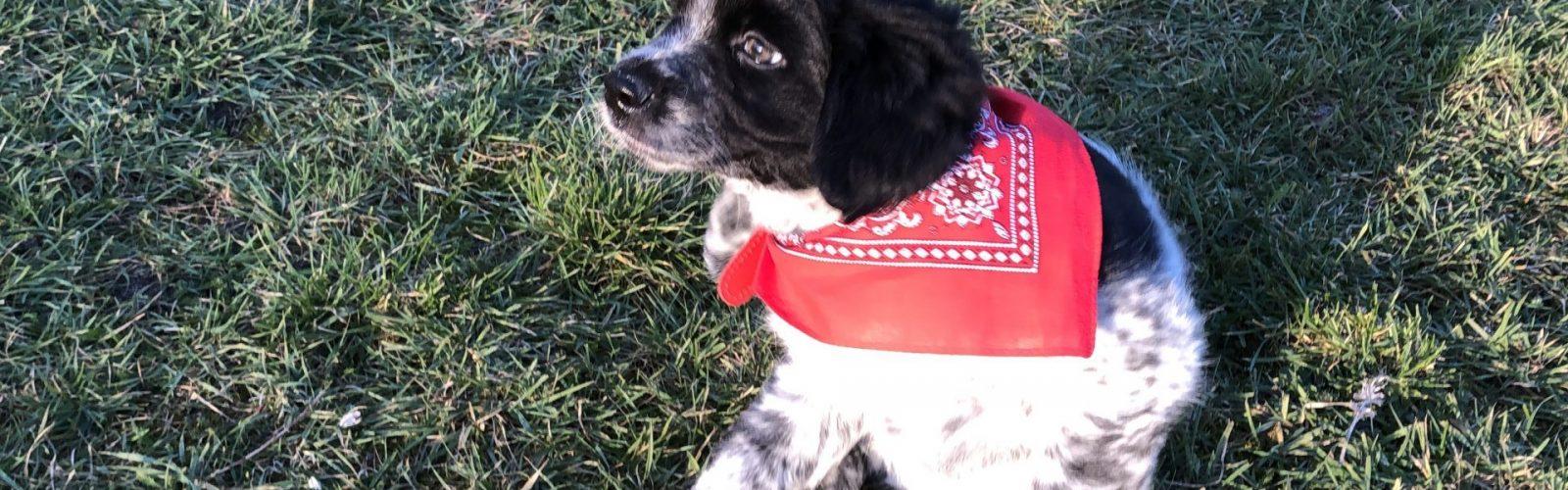 Onze nieuwe hond Inca