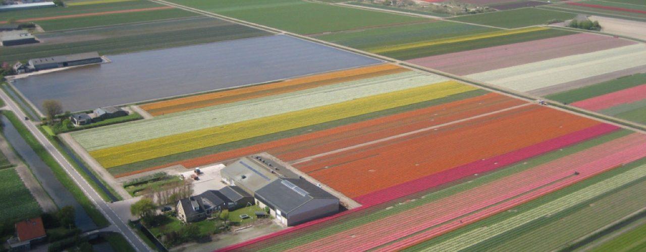 Kleurrijk Julianadorp