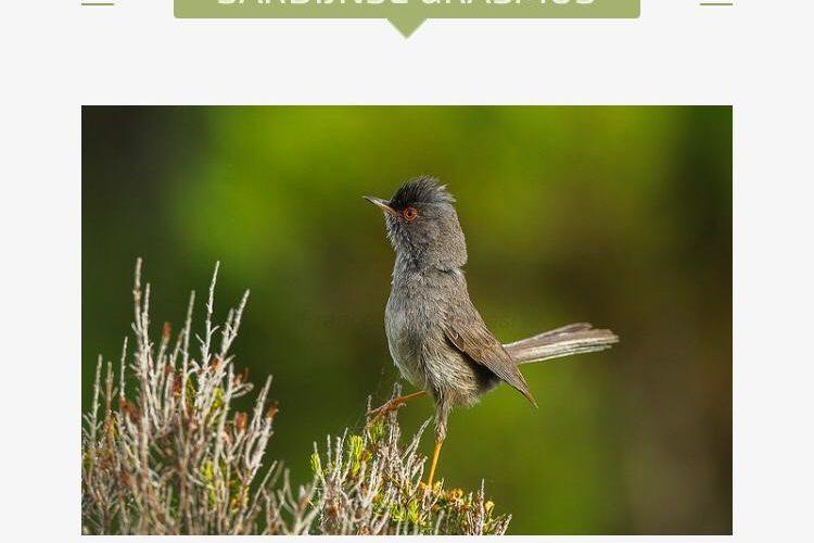 Een bijzonder vogeltje gespot!